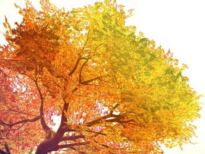 Tree Spirituality